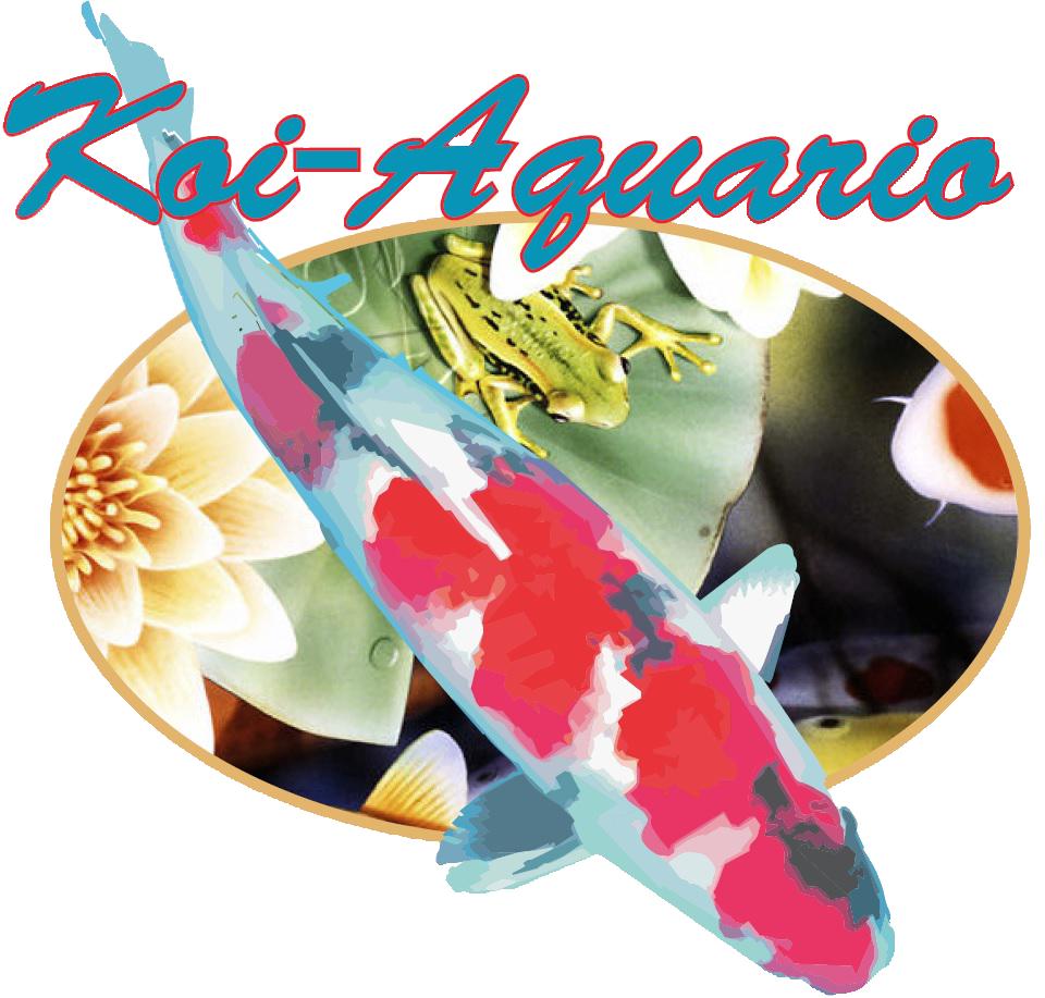 Koi-Aquario